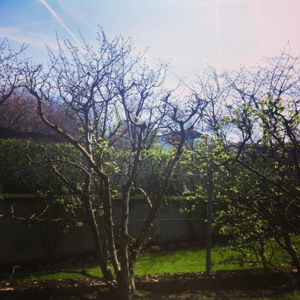 andre citroen park