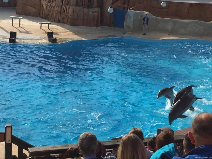 dauphins parc asterix