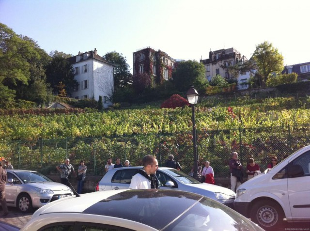 montmartre vineyards