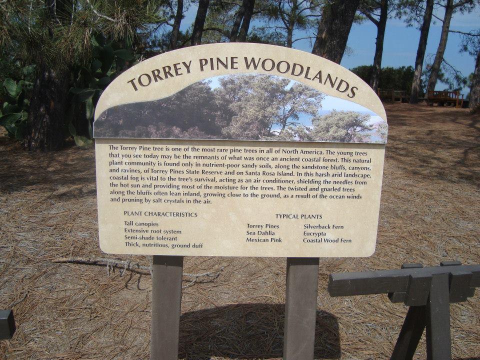 entrée torrey pines