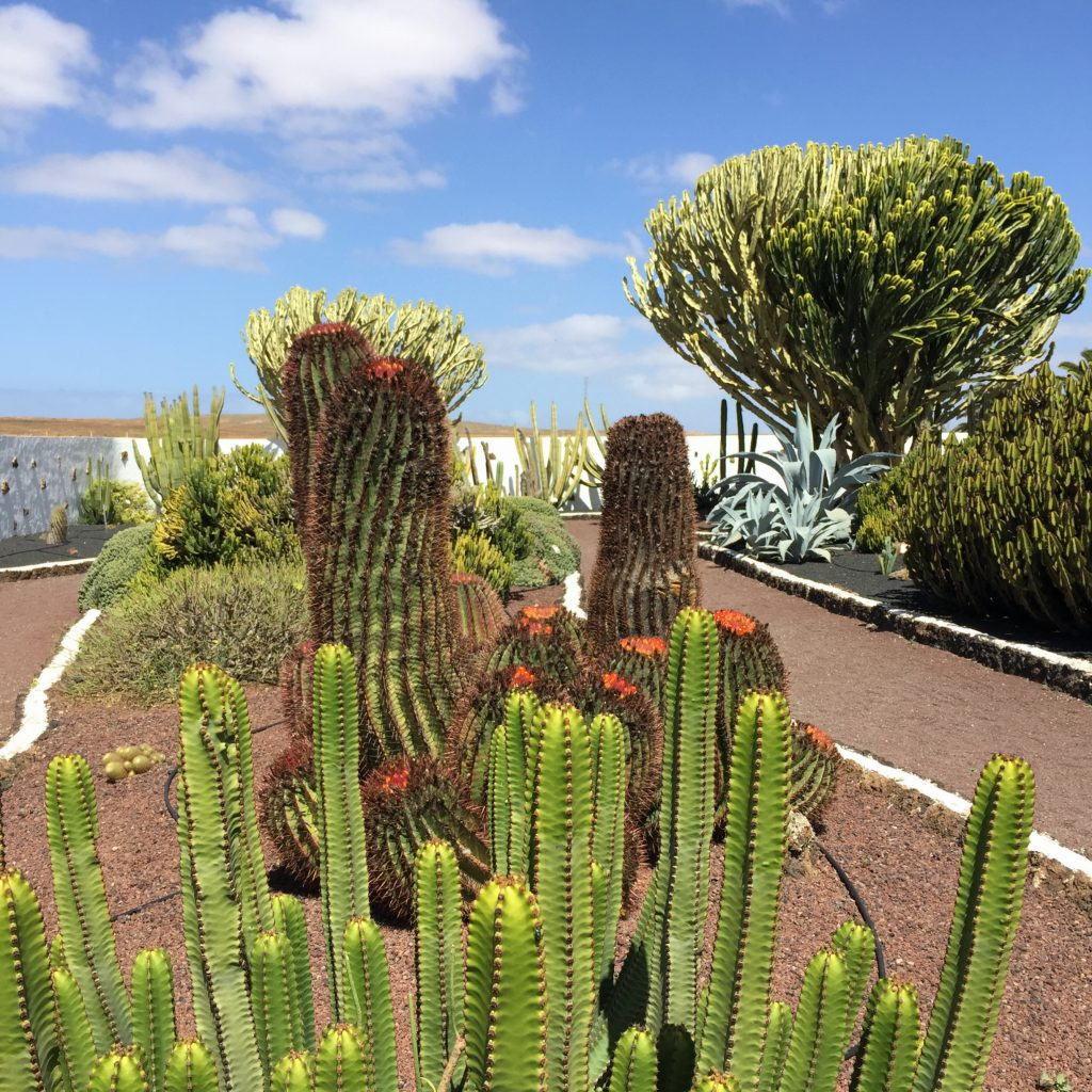 jardin cactus fuerteventura