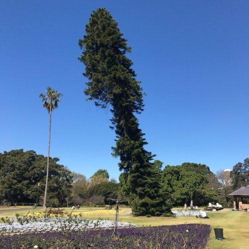 exploring sydney gardens